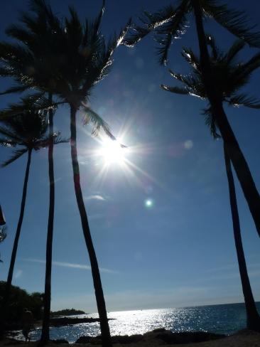 Sonne, Palmen, Urlaub